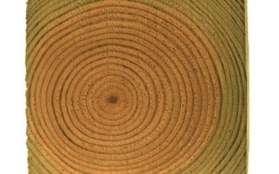 Kurs i Industriellt träskydd 2021